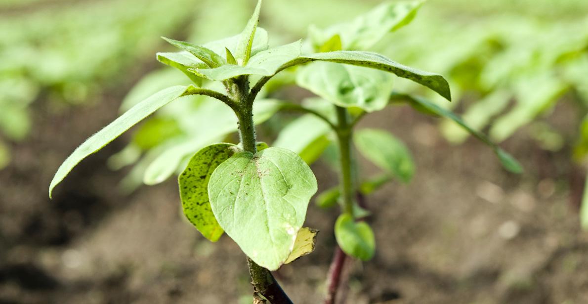 Technique-agriculture-horticulture