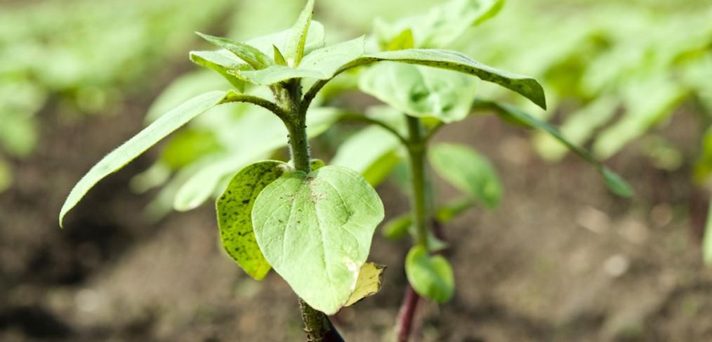 Ficelle technique pour l'agriculture et l'horticulture